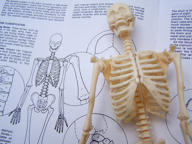 nimble_asset_skeleton